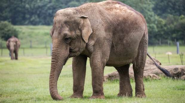 elephant at Whipsnade Zoo